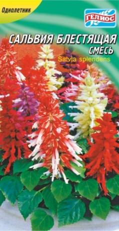 Семена Сальвия блестящая смесь, 0,1 г, ТМ Гелиос