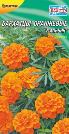 Семена Бархатцы Оранжевый Мальчик, 50 шт., ТМ Гелиос