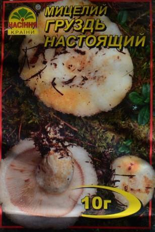 Мицелий Груздь Настоящий, 10 г
