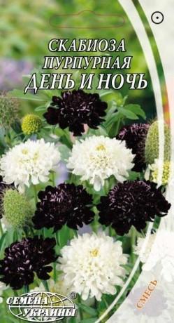 Семена Скабиоза пурпурная День и ночь, 0,3 г, ТМ Семена Украины