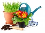 Товары по уходу за растениями