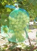 Сетка для защиты гроздей винограда от птиц и ос, 22*30 см