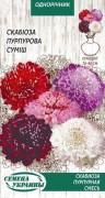 Семена Скабиоза пурпурная, 0.3 г, ТМ Семена Украины