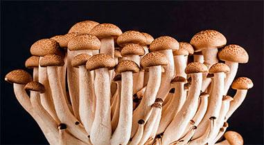 Как всего за 25 гривен получить грибную плантацию